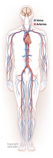 vascular vein treatments austin